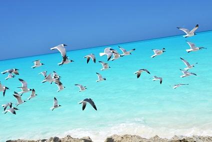 Yachting in the Bahamas - Yacht Vacations Bahamas | YACHTICO.com